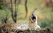 fun_predatory_cats_oboiwallpapers-ru_1600_1200_14