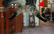 funny cats_oboiwallpapers-ru_480_680_118